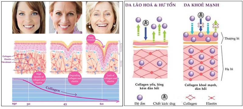Cấu trúc collagen dưới da